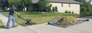 Professional Lawn Care Services in Omaha