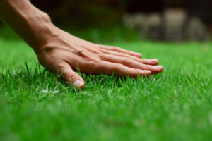 Lawn care services Omaha