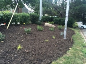 Comfort Inn, Commercial Landscaping, June 2016